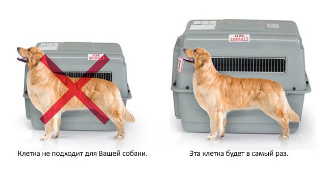Размеры клетки для перевозки собаки в самолете