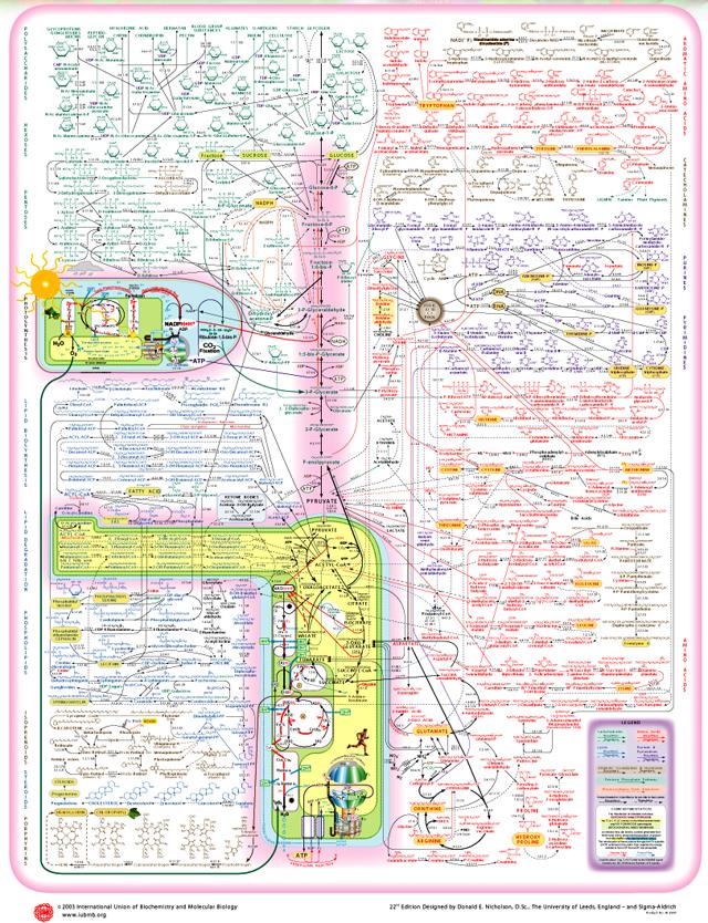 Биохимическая сеть