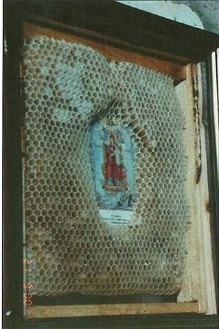 верующие пчелы 2 (319x480, 154Kb)