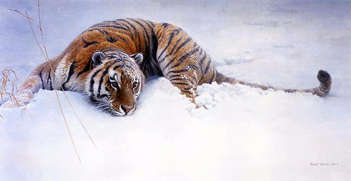 1310901897_sudden-move-siberian-tiger_www.nevsepic.com.ua (700x362, 295Kb)