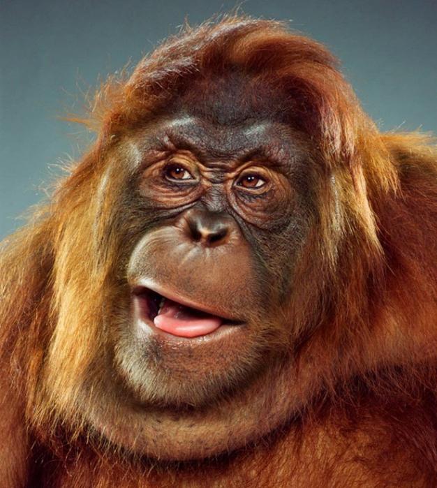 Летию, прикольные картинка с обезьяной