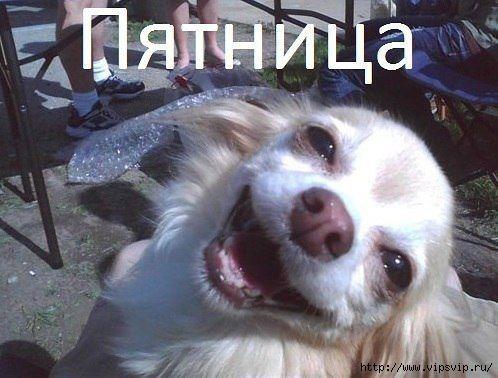5745884_pyatnica_radost (498x378, 105Kb)