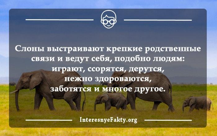 Interesnyie-faktyi-o-slonah-3