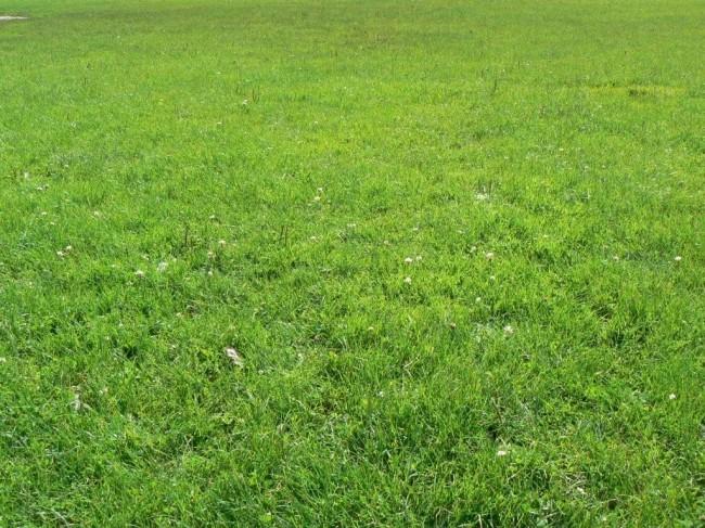 Вид спортивного газона на даче