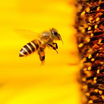 Почему мёд твердый?