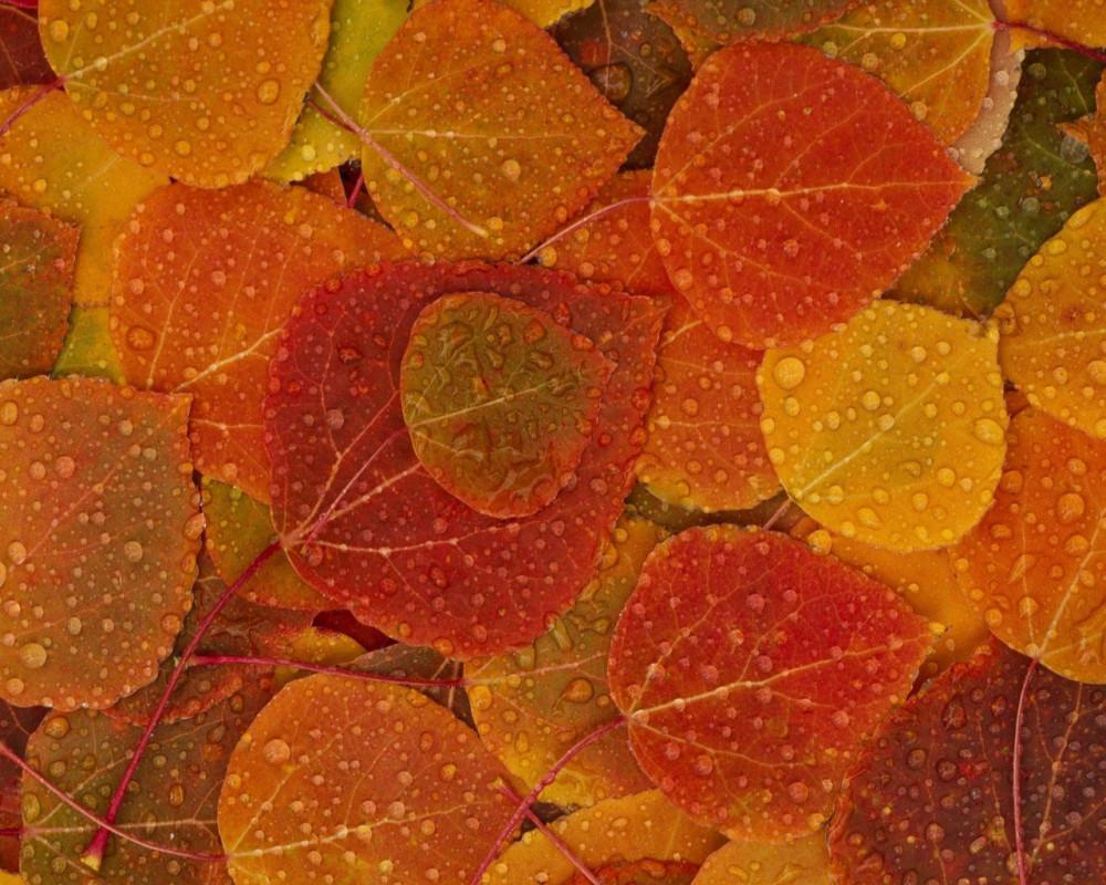 Шедевры поэзии - Страница 2 Mailservice?url=https%3A%2F%2Fc3.emosurf.com%2F0005aJ004ZUo0g8%2Fwallpapers-autumn-22