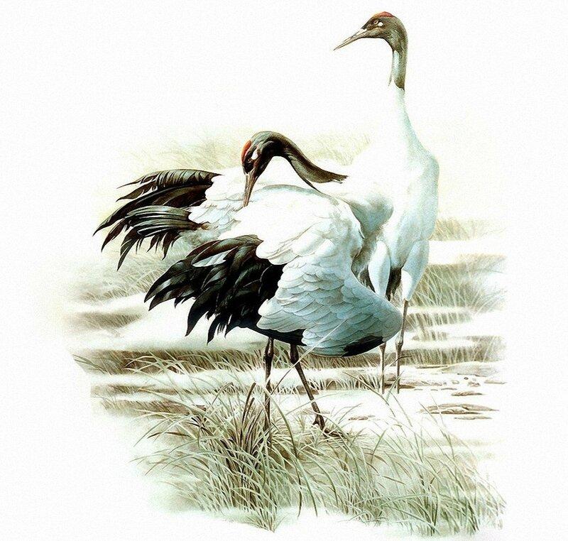 Птицы Zeng Xiao Lian