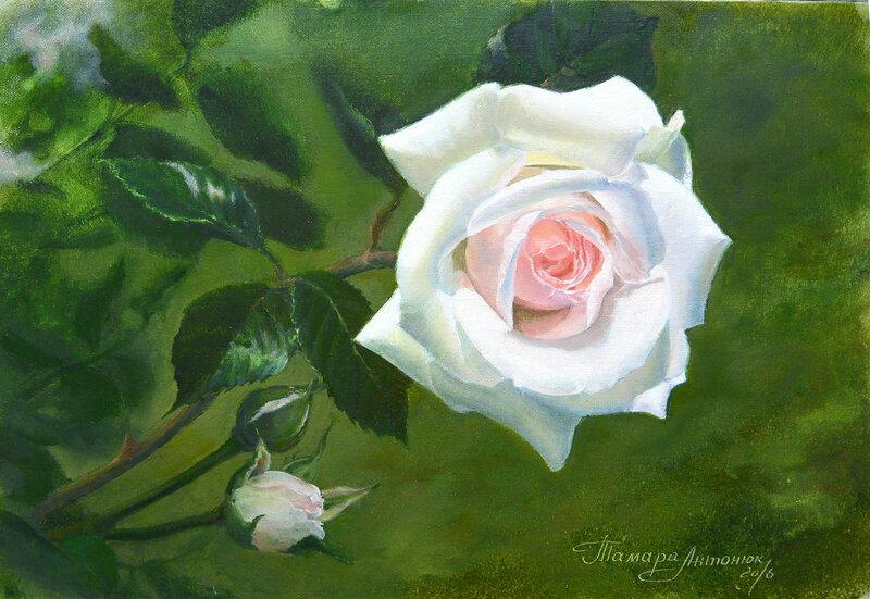 Портрет розы