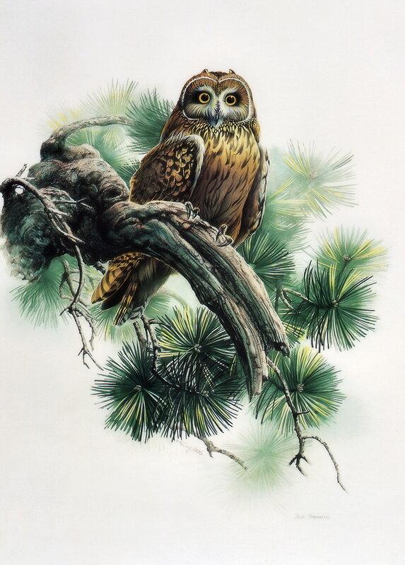 Zeng Xiao Lian.Птицы