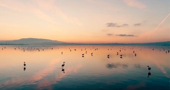 Tarkan'dan İzmir'in Gediz Deltası'nın UNESCO Dünya Doğa Mirası olması için destek