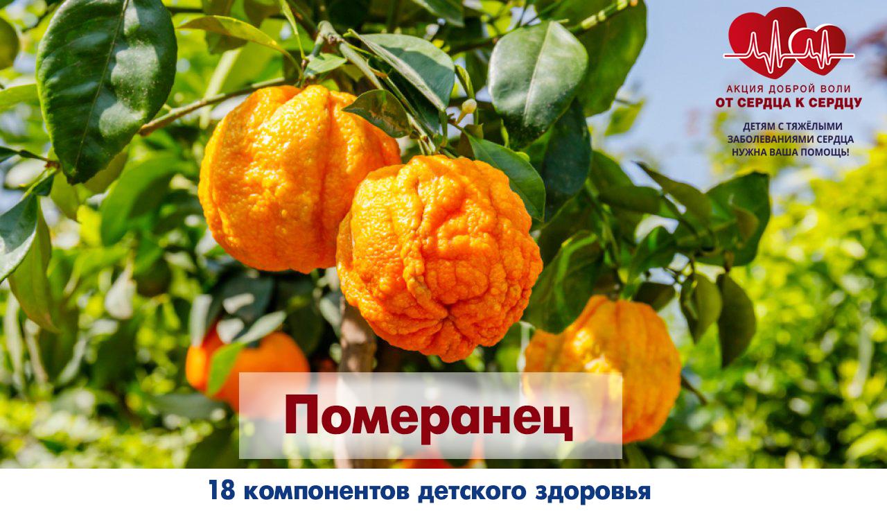 fmt_96_24_rrpomeranec