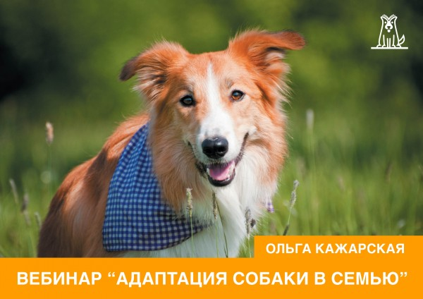 Адаптация собаки в семью