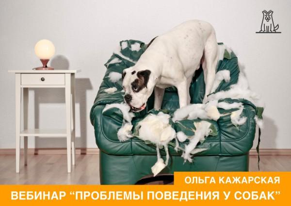 Проблемы поведения у собак