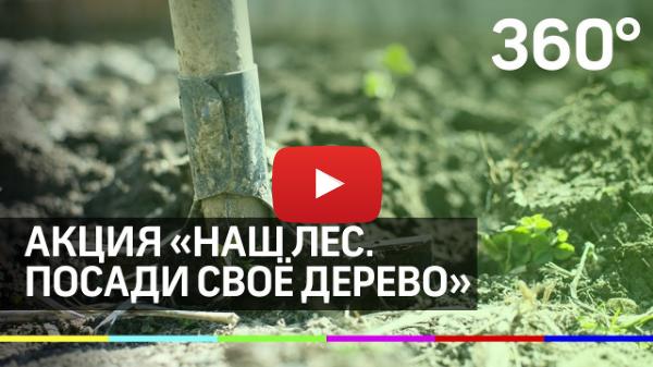 Акция «Наш лес. Посади своё дерево» пройдёт в Подмосковье 21 сентября