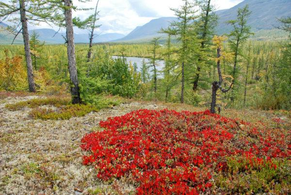 Красноярский край получит 1,2 млрд рублей на экологические проекты
