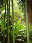 Бамбук зеленый d 80-90мм L=2,8-3м