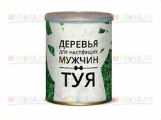 """Дерево в банке """"Ель голубая"""", арт 412255"""