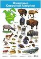 Плакат Дрофа-Медиа Животные Северной Америки