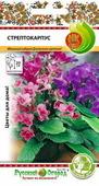 Стрептокарпус - Цветы многолетние