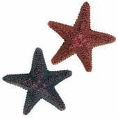 Декорация TRIXIE для аквариума морская звезда 9см