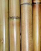 Бамбук обожженный лакированный d 70-80мм L=2,8-3м
