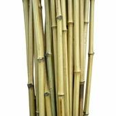 Бамбук обожженный лакированный d 18-23мм L=2,8-3м