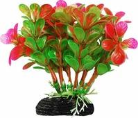 """Растение для аквариума Уют """"Бакопа зелено-розовая"""", высота 11 см"""