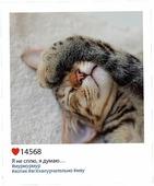 """Открытка-инстаграм Дарите Счастье """"Котя"""", 8,8 х 10,7 см"""