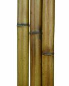Бамбук обожженный лакированный d 40-50мм L=2,8-3м