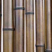 Бамбук шоколадный лакированный d 50-60мм L=2,8-3м