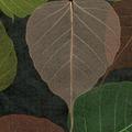 Натуральные обои Листья Прима Верде, 5,5х0,91 м