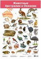 Плакат Дрофа-Медиа Животные Австралии и Океании