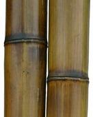 Бамбук обожженный d 80-90мм L=2,8-3м