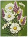 """Открытка (почтовое вложение) """"Полевые цветы"""" худ. Куртенко 1987 подписана Y330406"""