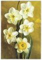 """Открытка (открытое письмо) """"Нарциссы"""" фот. Костенко 1973 A501802"""