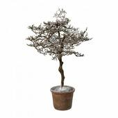 """Gasper GmbH Дерево искусственное """"Заснеженный граб"""" в горшке (62 см)"""