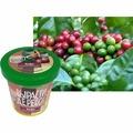 """Зеленый капитал Набор для выращивания """"Комнатные растения"""" - Кофе арабский карликовый"""