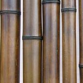 Бамбук шоколадный d 60-70мм L=2,8-3м