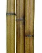 Бамбук обожженный лакированный d 50-60мм L=2,8-3м
