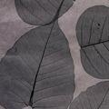Натуральные обои Листья Прима Ахумадо, 10х0,91 м