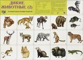 Плакат Творческий Центр СФЕРА Дикие животные