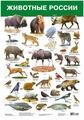 Плакат Дрофа-Медиа Домашние животные