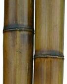 Бамбук обожженный лакированный d 80-90мм L=2,8-3м