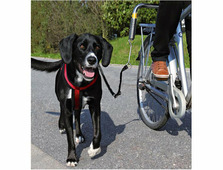 Trixie велоспрингер для крупных собак 1287
