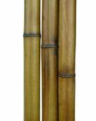 Бамбук обожженный d 40-50мм L=2,8-3м