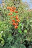 Цветок искусственный Гипсофила мини 38см микс G383