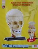Набор для исследований Edu Toys SK010 Анатомический набор