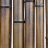 Бамбук шоколадный лакированный d 60-70мм L=2,8-3м