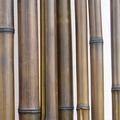 Бамбук шоколадный d 30-40мм L=2,8-3м
