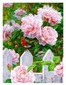 "Белоснежка Картина по номерам ""Птичка на заборе"" 30х40 см (313-AS)"